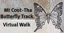 Mt Coot-tha Butterfly Track
