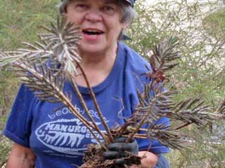 Bushcare Volunteer