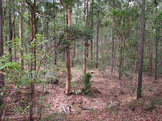 Preserving Native Bushland